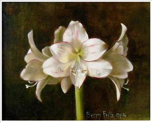 Title: Picotee Amaryllis , Size: 8x10 , Medium: oil painting on canvas