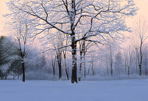 Title: Winter Sunrise , Size: 27x40 , Medium: giclee on canvas-emb.